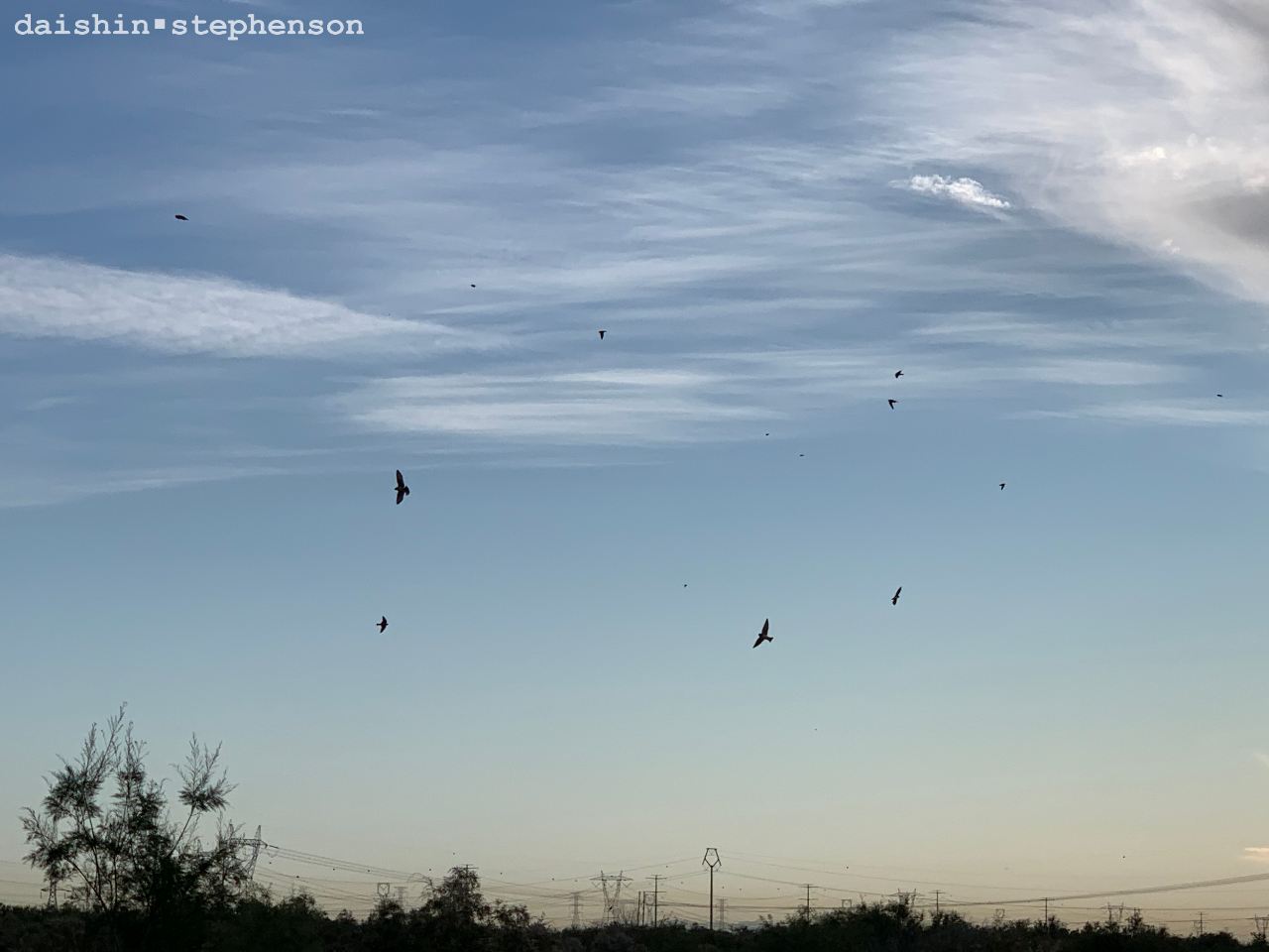 birds in flight at sunrise over desert