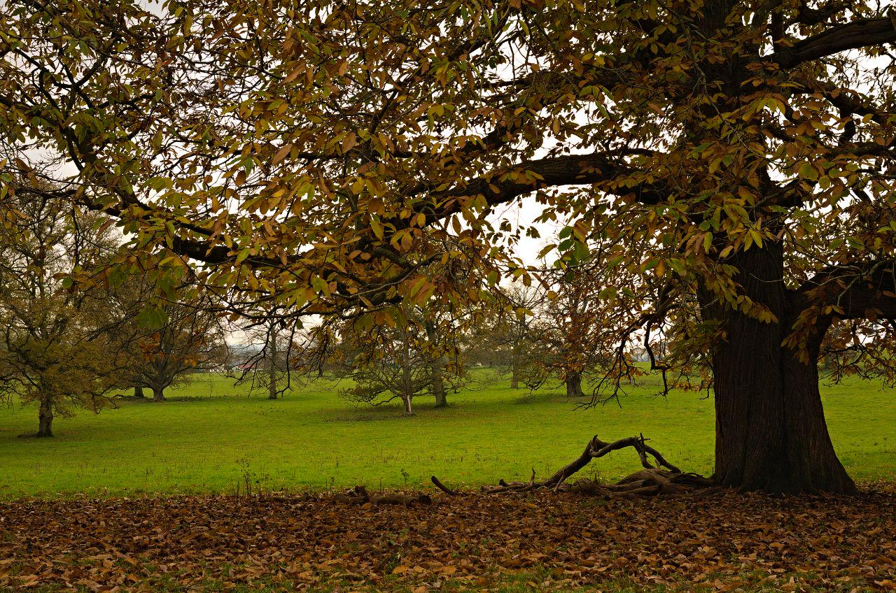 An autumn scene at Tyntsfield