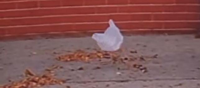 sac en plastique volant