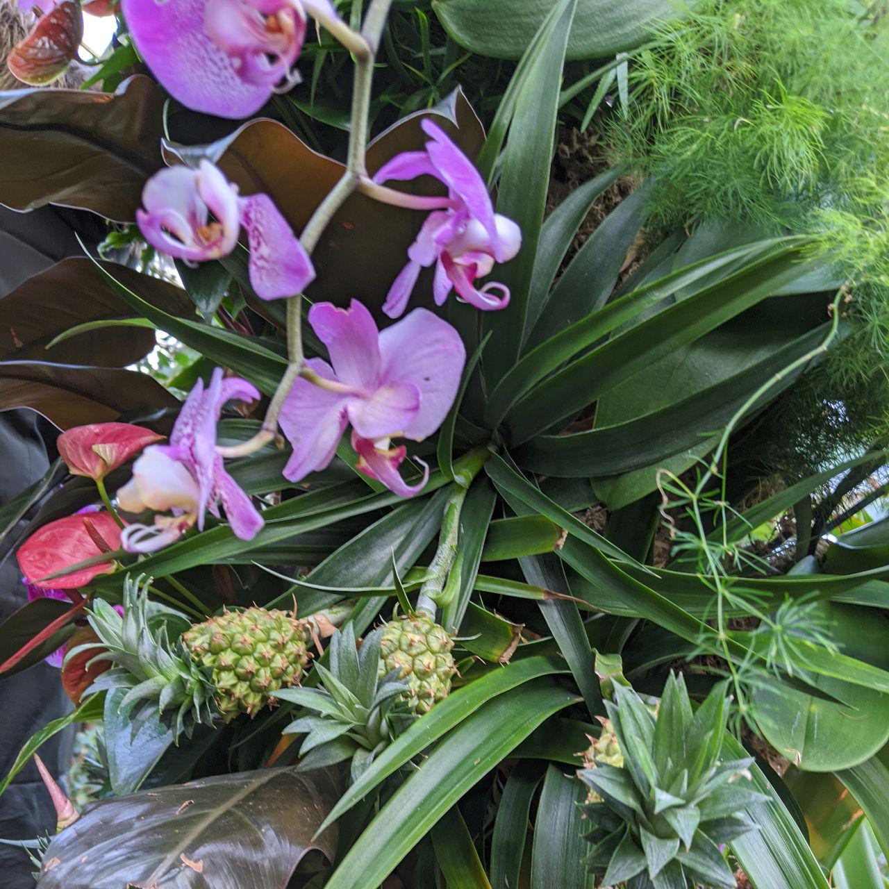 Tiny pineapples at Kew Orchid Festival.