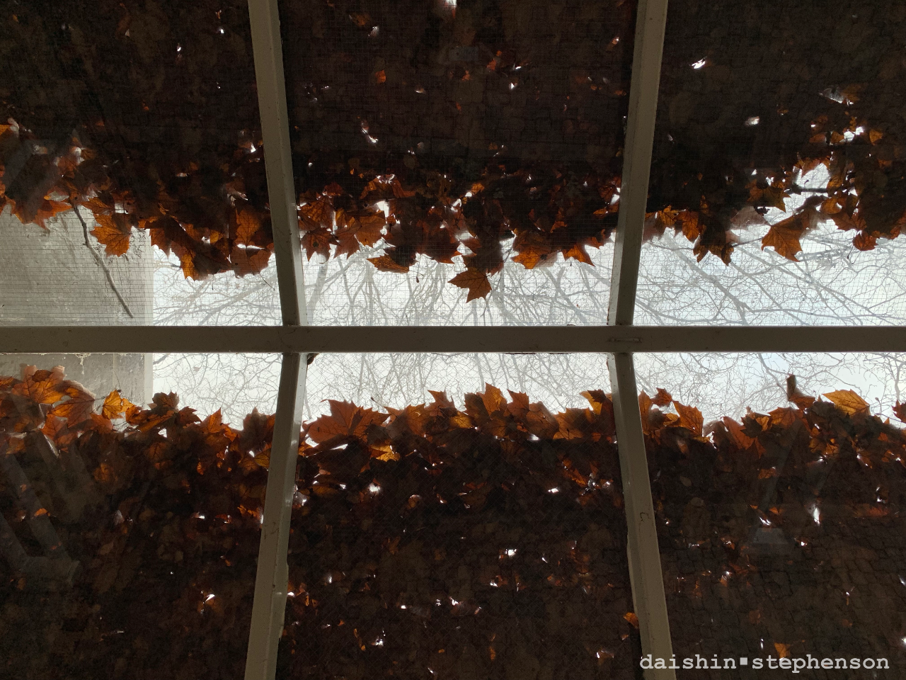 fallen leaves caught on outdoor glass-covered walkway roof