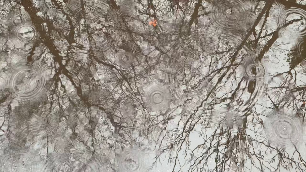 video screenshot of tree reflection in rain puddle obliterated by raindrops