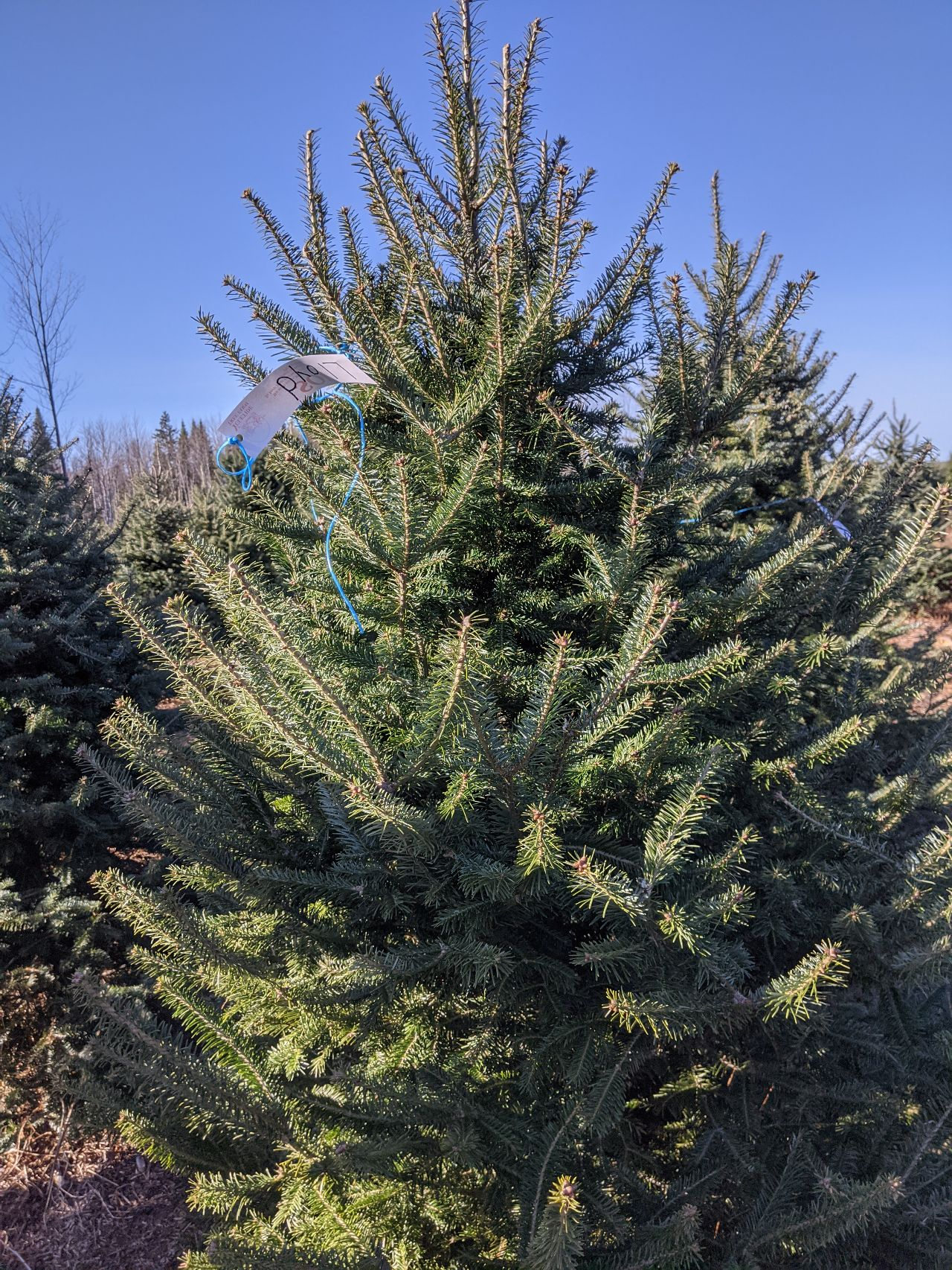 Christmas tree 2020 One