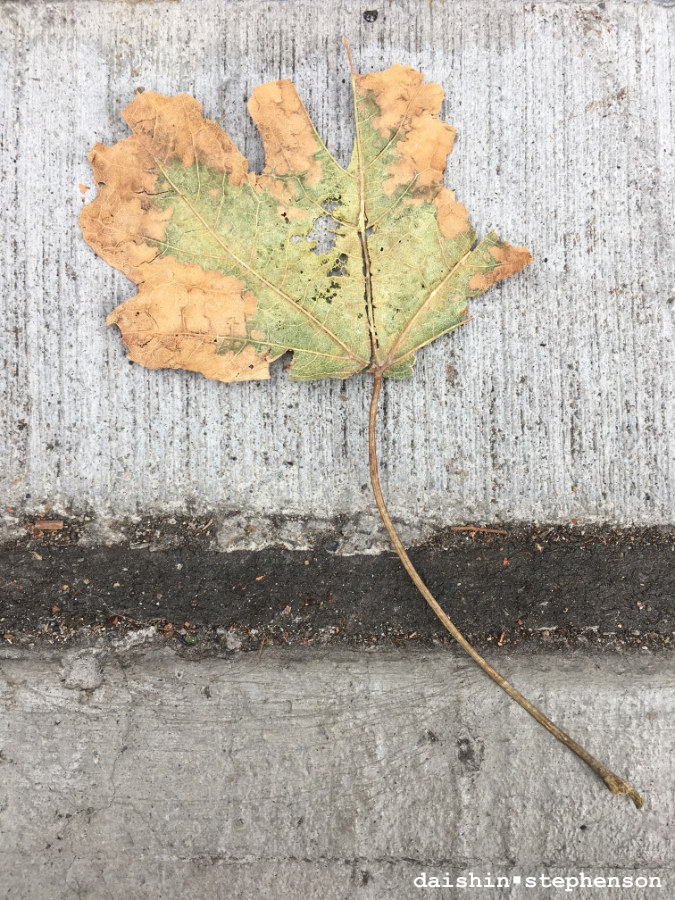 leaves on a sidewalk