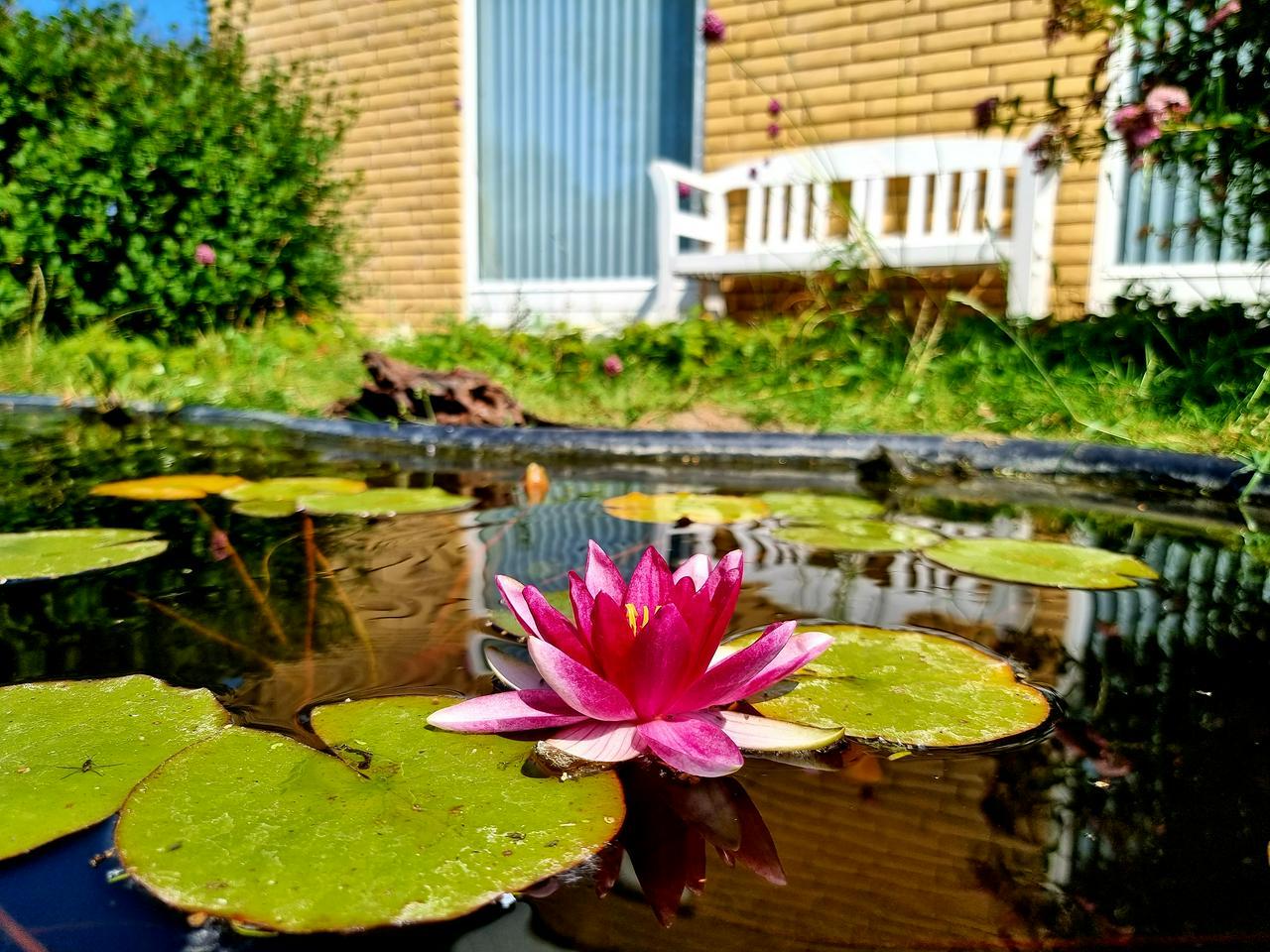 Lotus Flower in Garden Lake