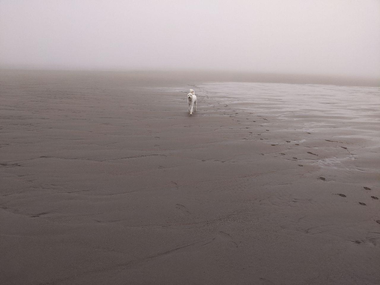 Max on beach 1