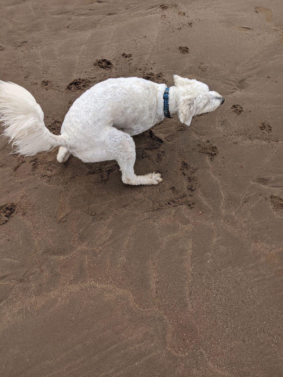 Max on beach 4