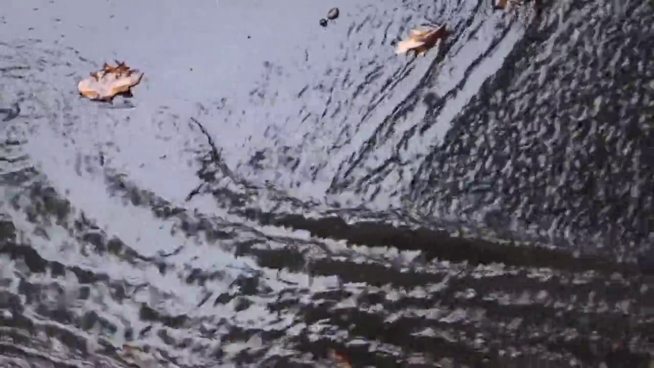 street waves caused by heavy rain carrying leaves