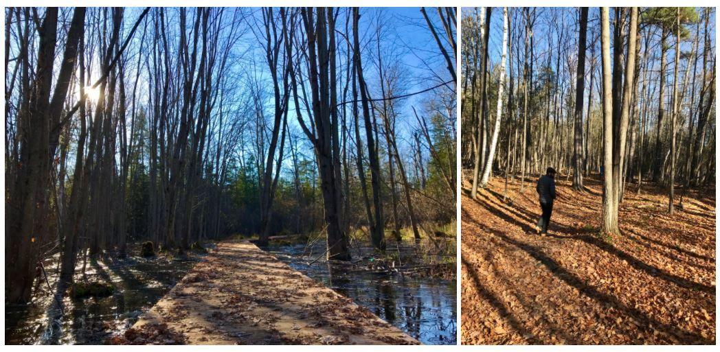P4 Trail Stony Swamp - Ottawa, ON