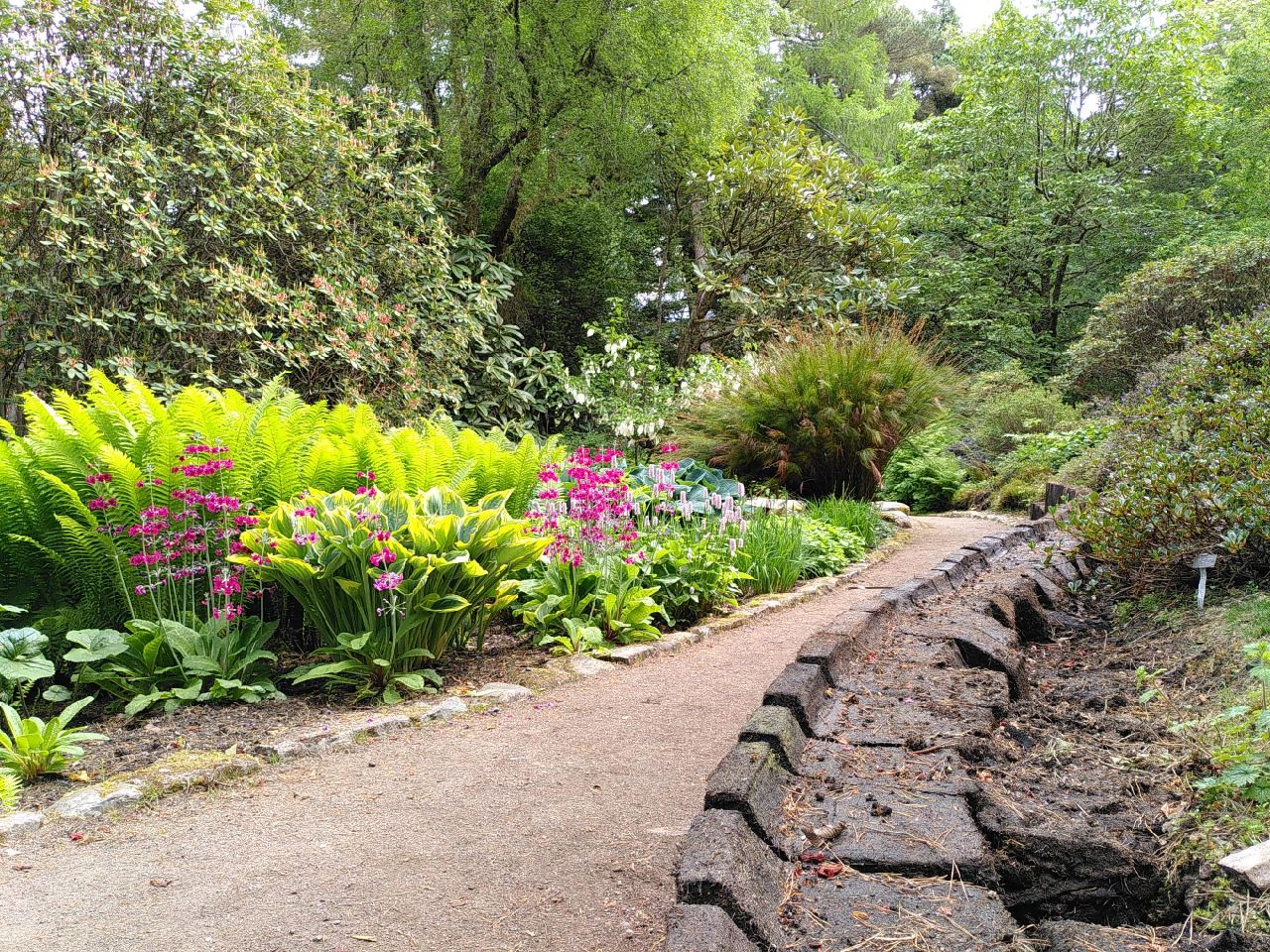 Large blocks of cut peat, shaped like a seat with a short back, line the right of the path. On the other side of the path are ferns and flowers lit with sunlight.