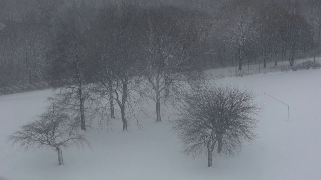 video still of snow falling in park with trees
