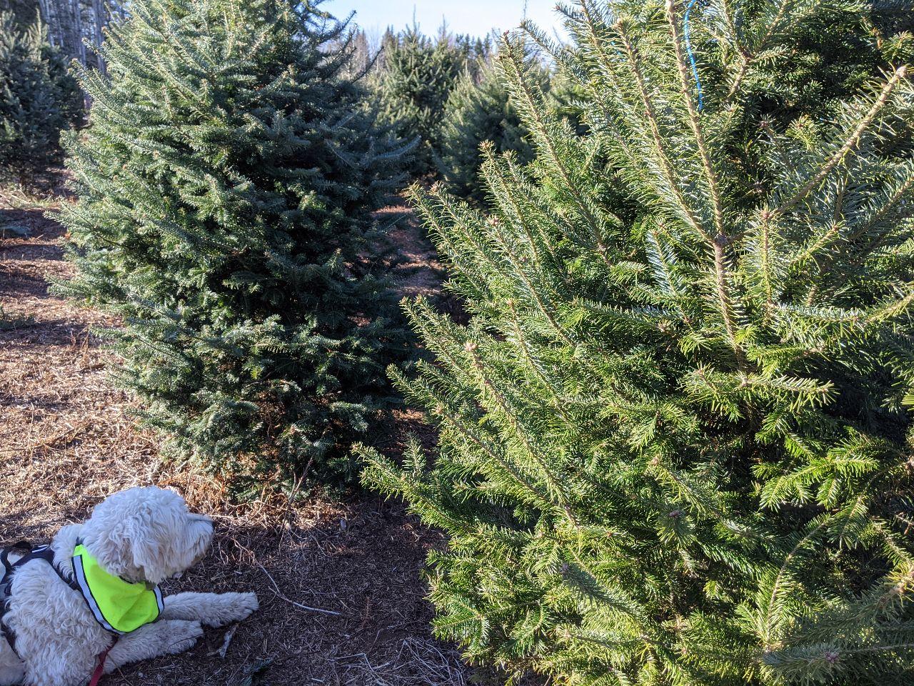 Christmas tree 2020 Four