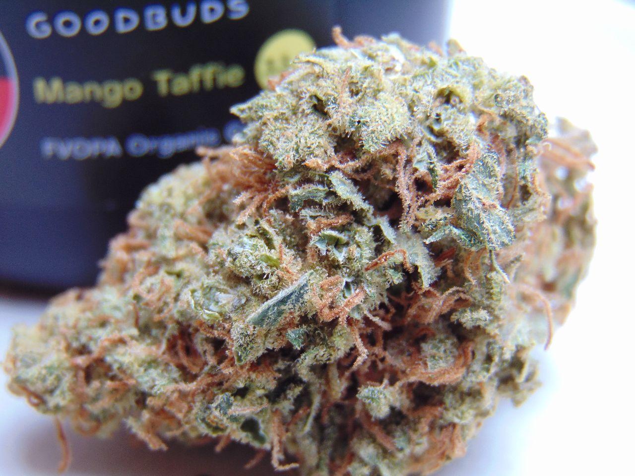 goodbuds-mangotaffie-thesmells