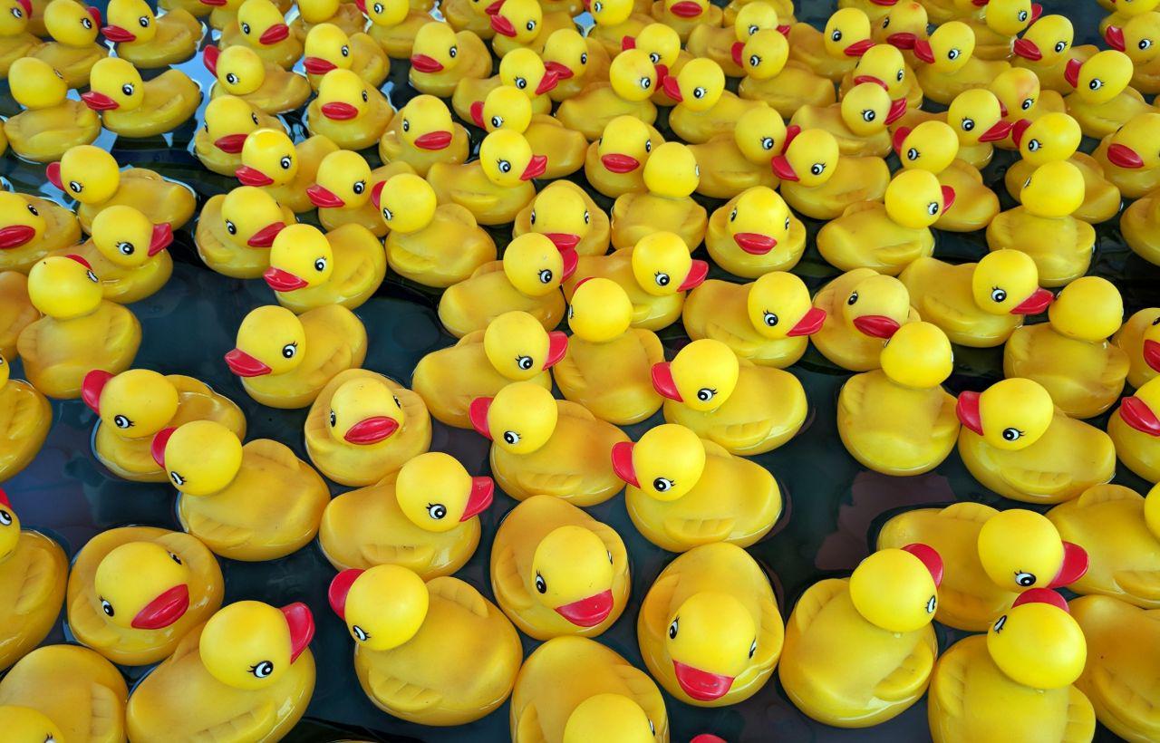 Many rubber ducks