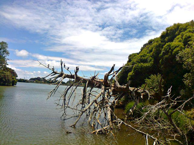 A view of the Orakei Basin in Auckland