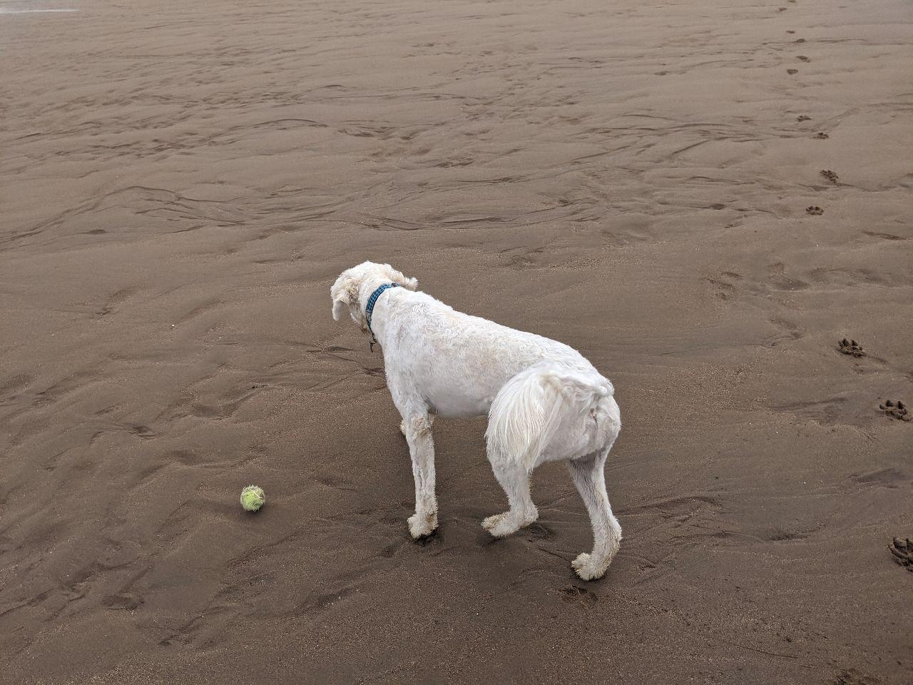 Max on beach 5