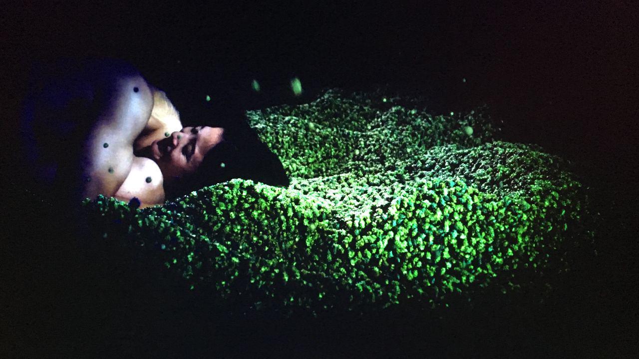 洋介美紗子兩人在整片鬼針草上面做愛