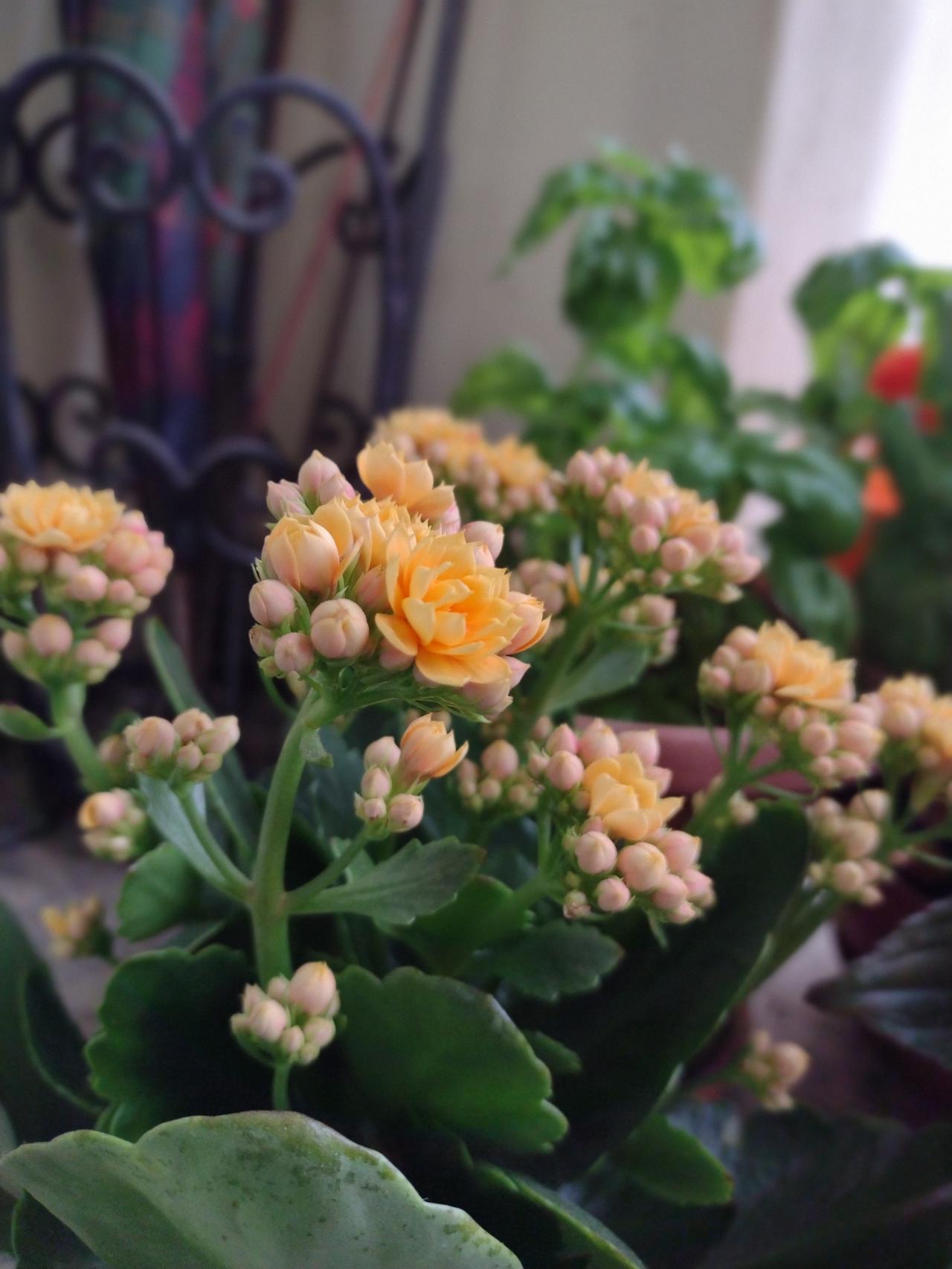 Flourishing yellow