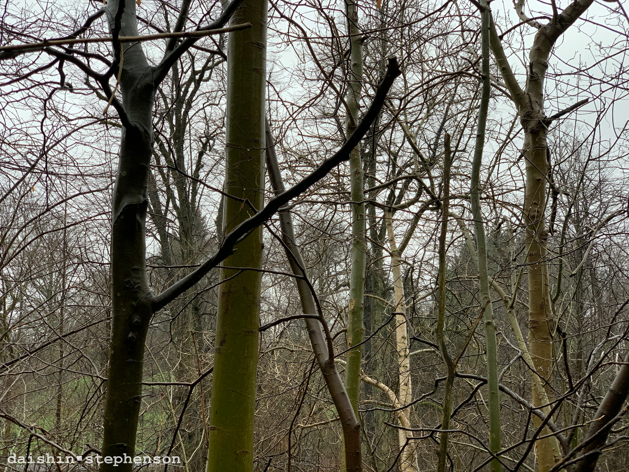 looking through bare-limbed trees on a wet winter day