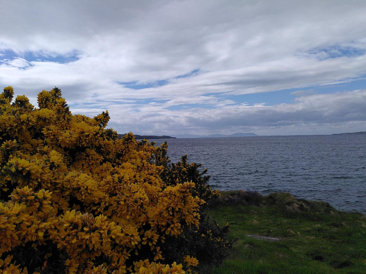 A gorse bush (Ulex europaeus) abundant with bright, little, flowers giving a coconut smell, sits in the left of the image. Water stretches across to the horizon, Isle of Skye pops its head above the horizon.