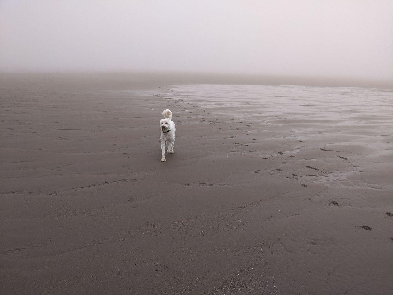 Max on beach 2