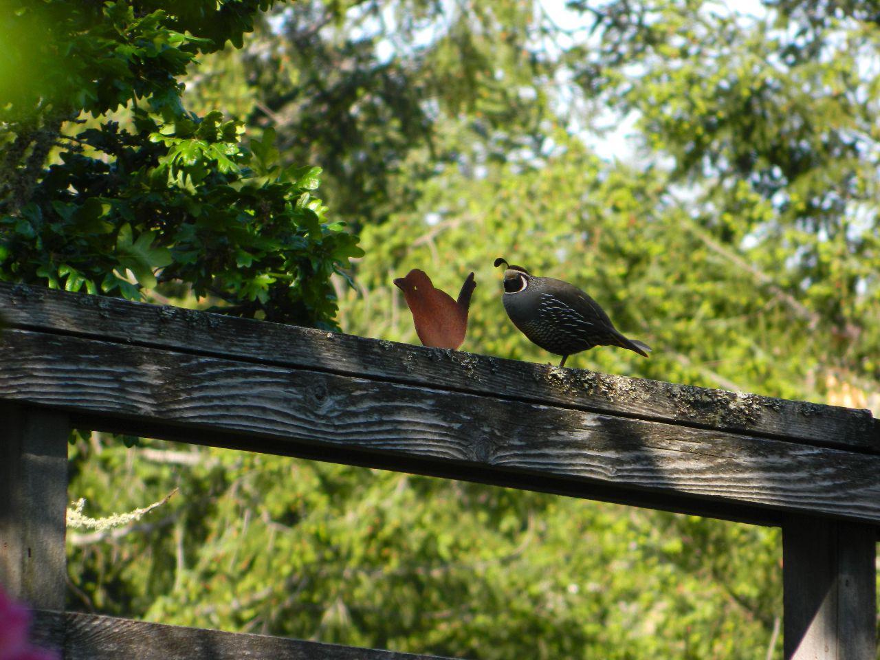 quail wren friends