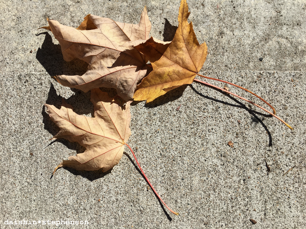 three sun-dried leaves on sidewalk