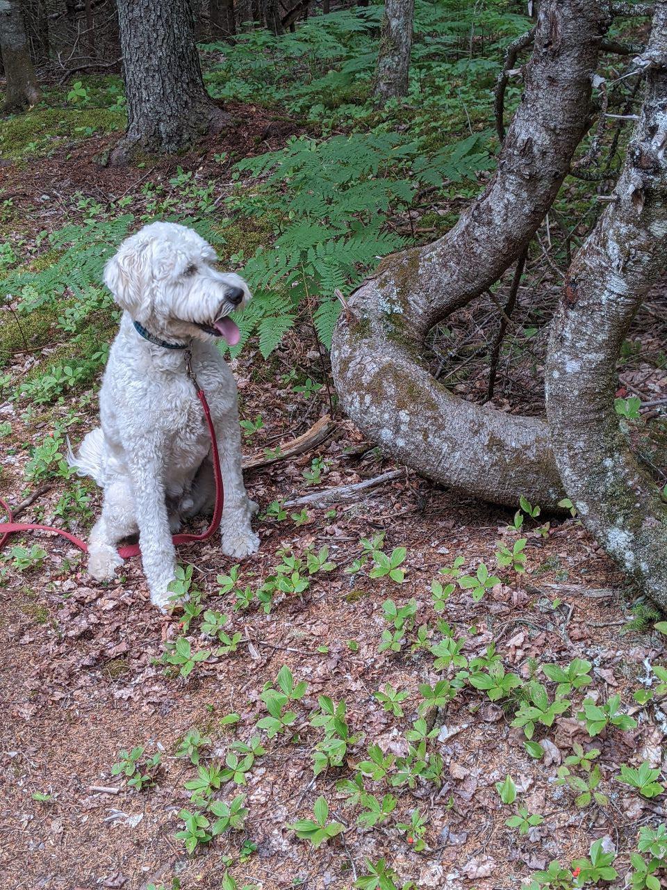 Max in woods 2