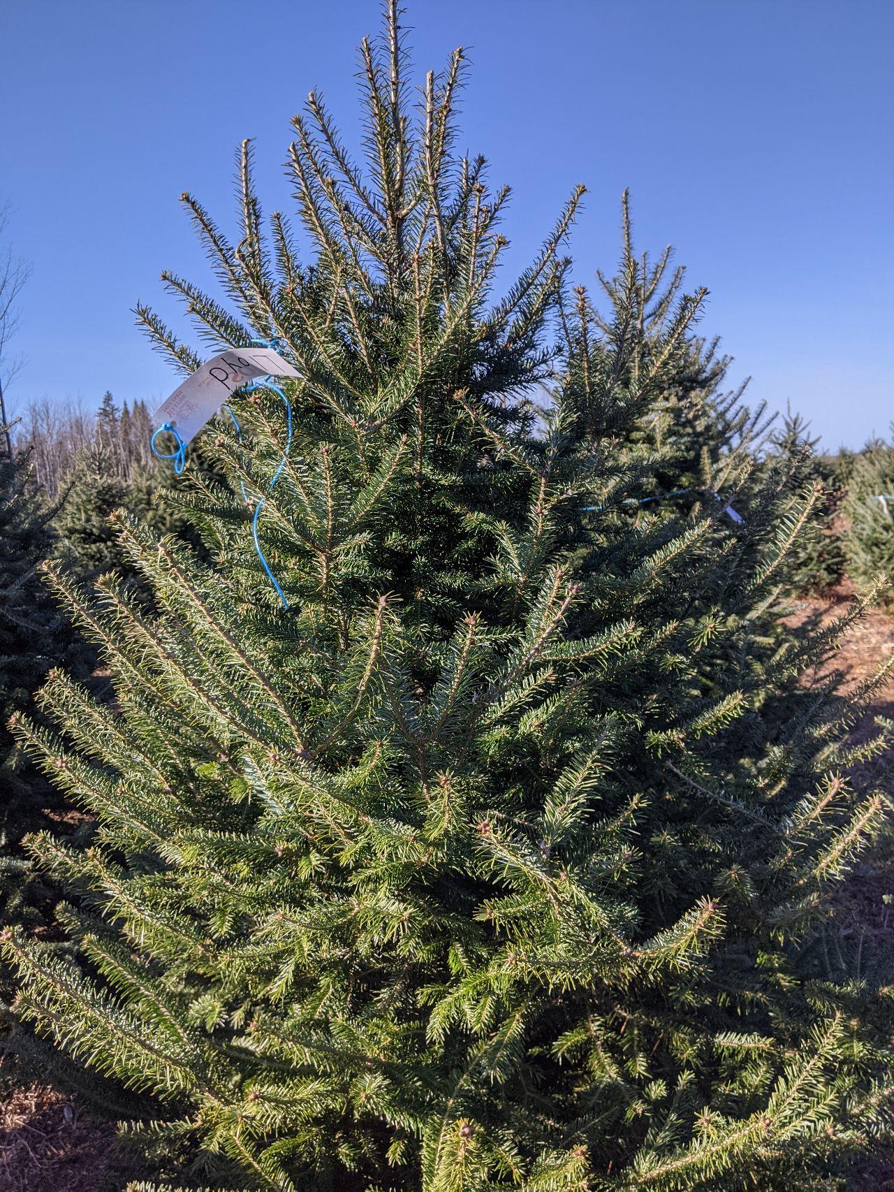 Christmas tree 2020 Two