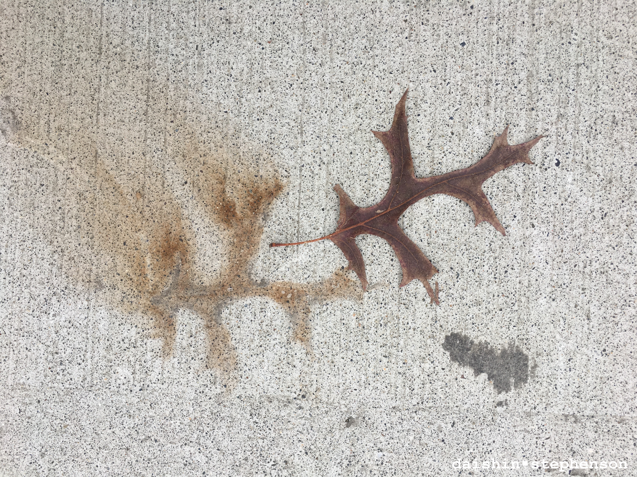 dry leaf beside its stained imprint on sidewalk