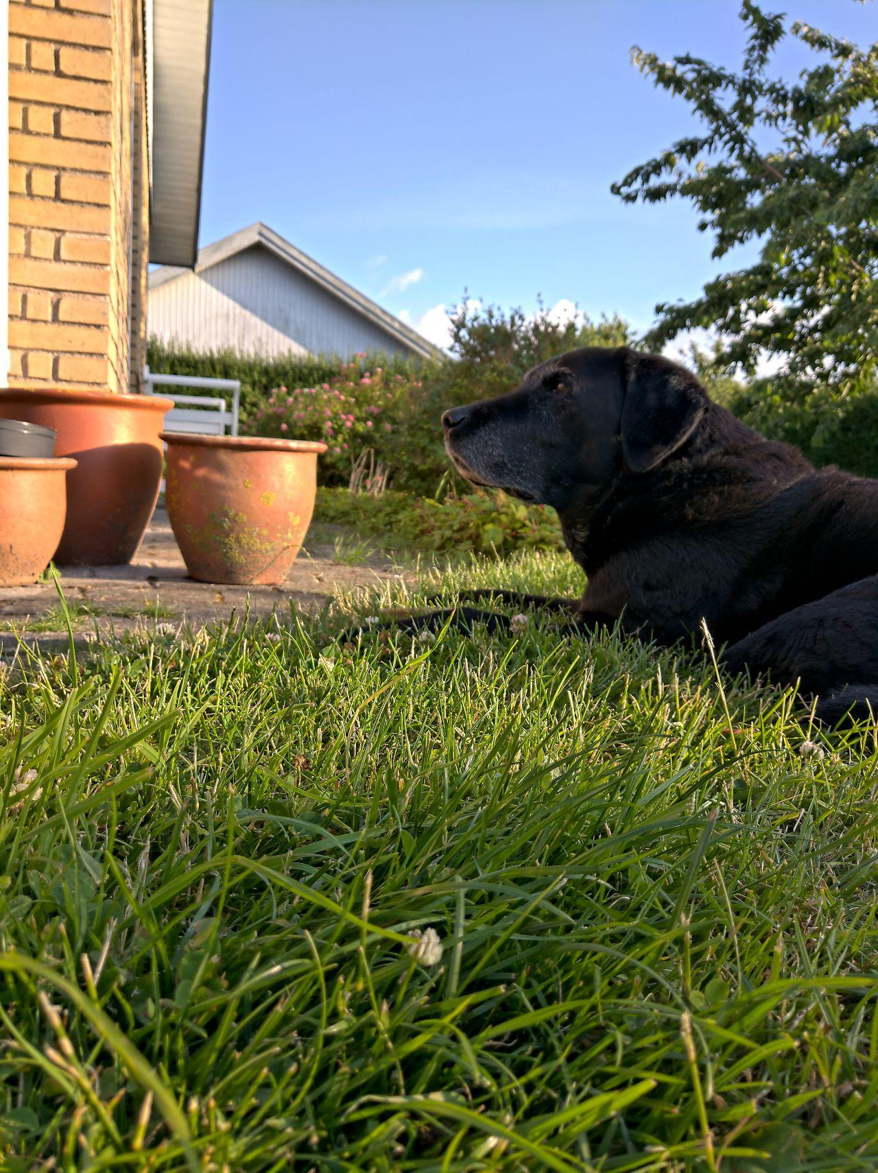 Dog enjoying nature on the grass