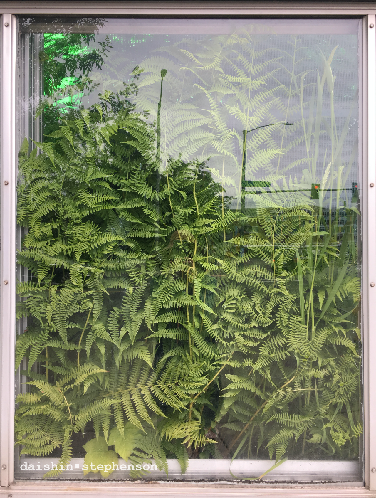 fern-filled window