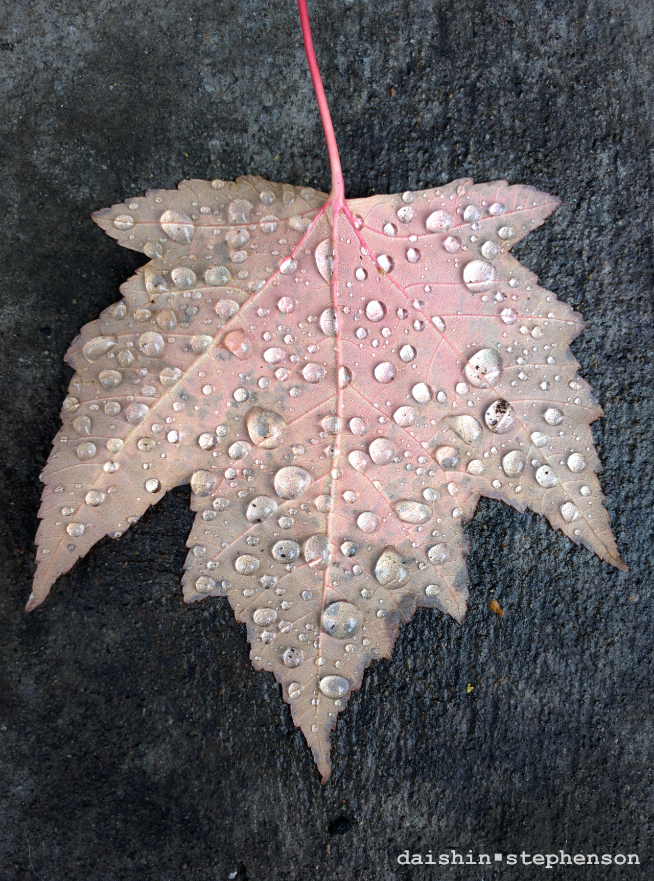 leaf on sidewalk covered with raindrops