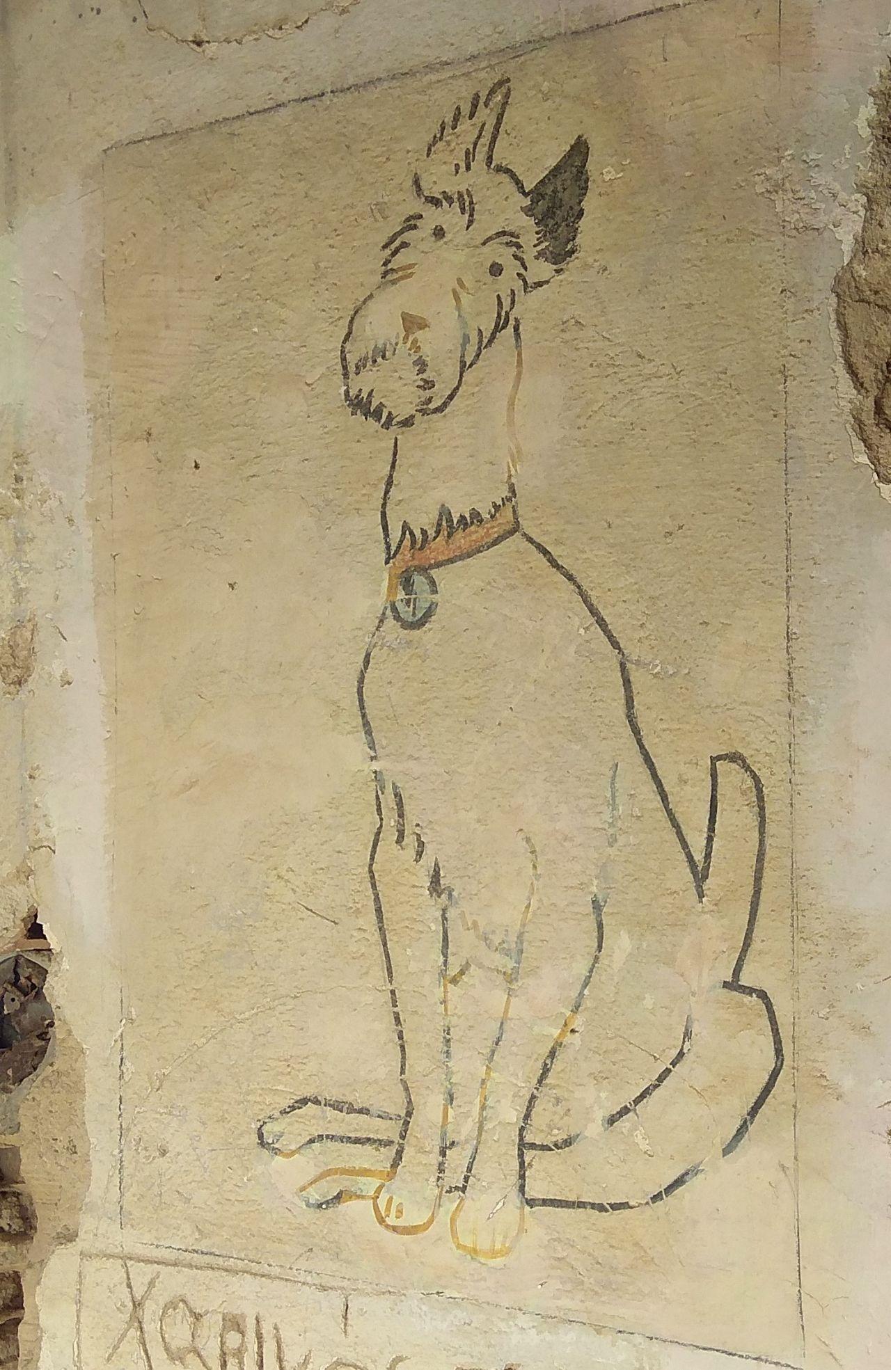 Ο μικρόσωμος σκύλος που θυμίζει τον Μιλού