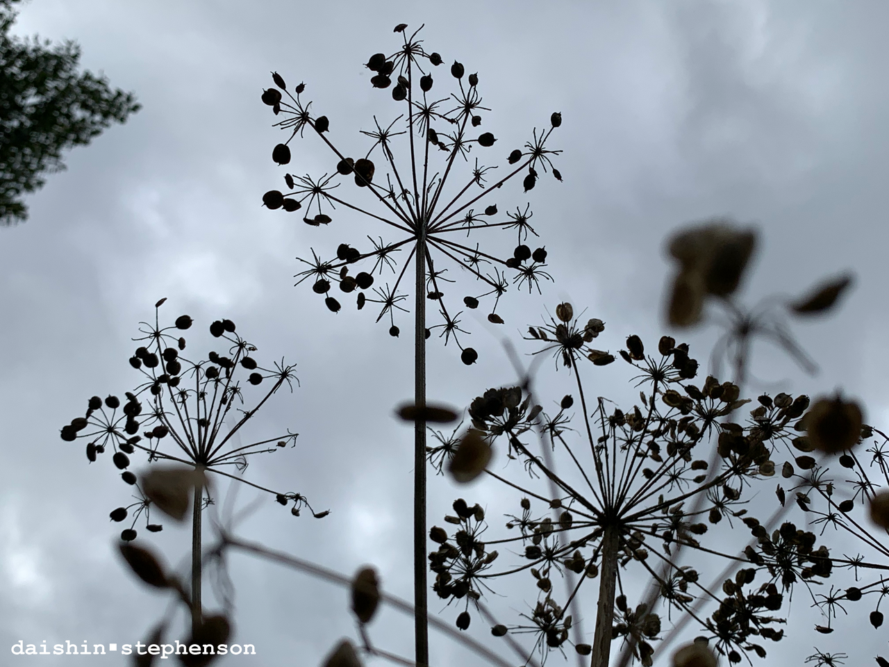 laying on ground looking up at dried seed pods on stems