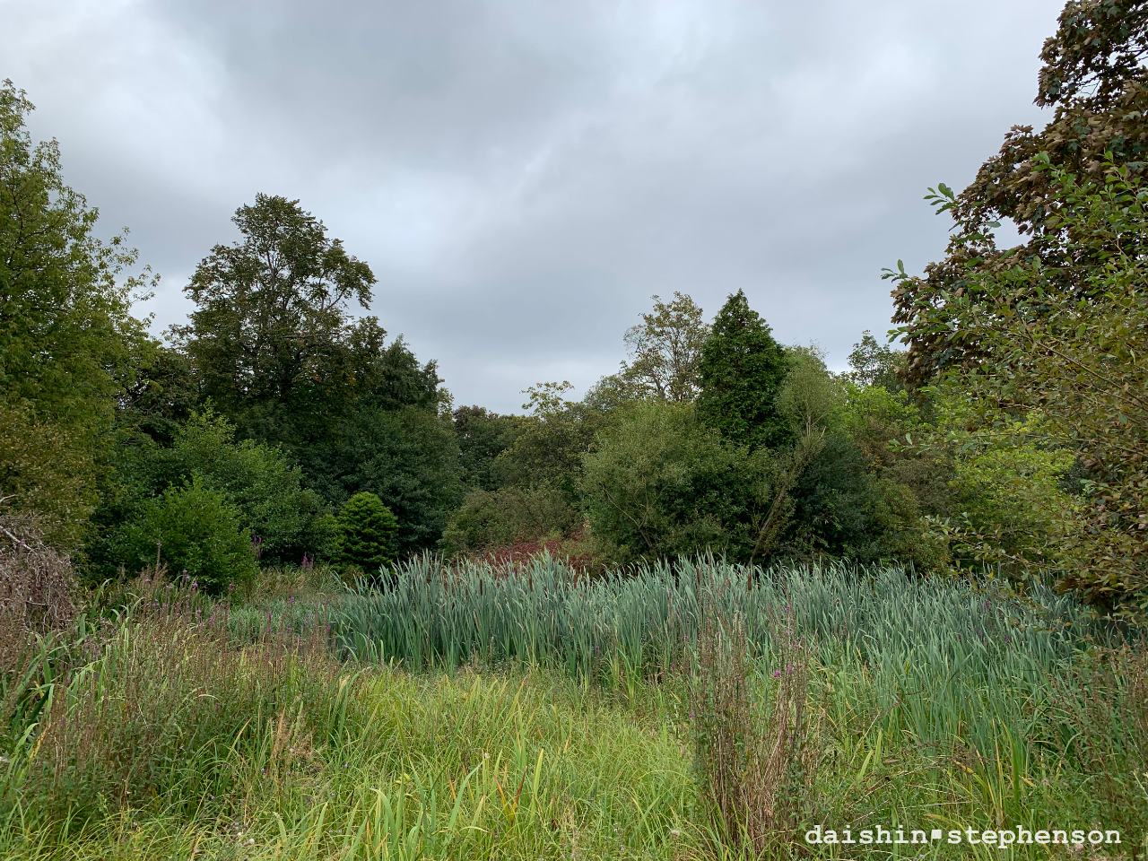 greenery surrounding kelvin park duckpond