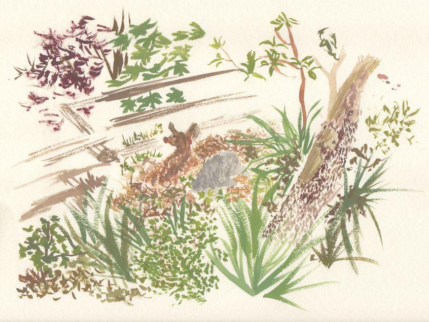 Fawn Watercolour Sketch