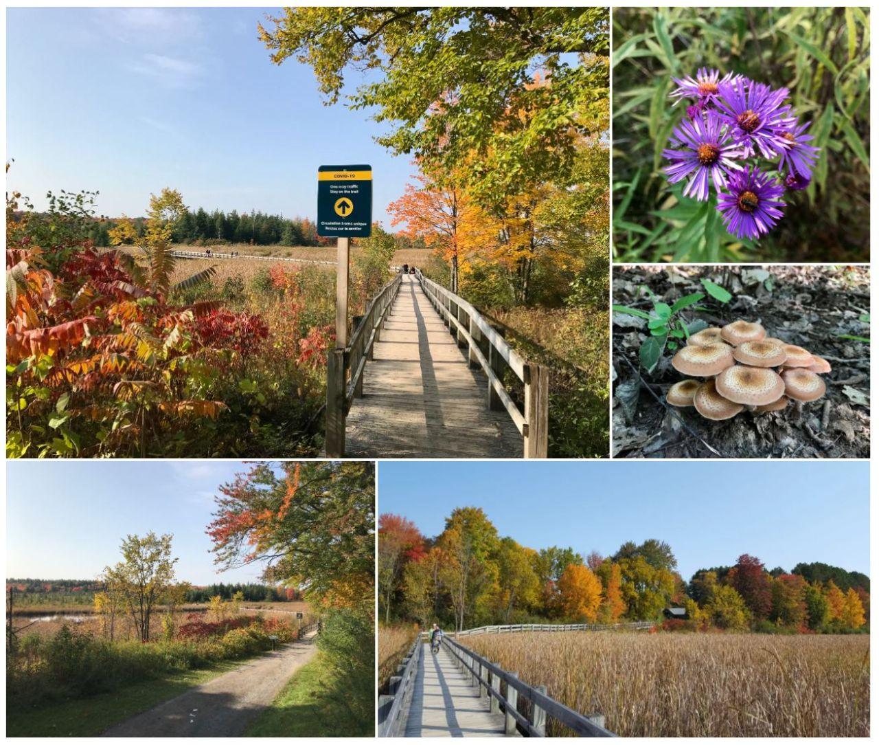 Mer Bleu Trail - Ottawa, ON