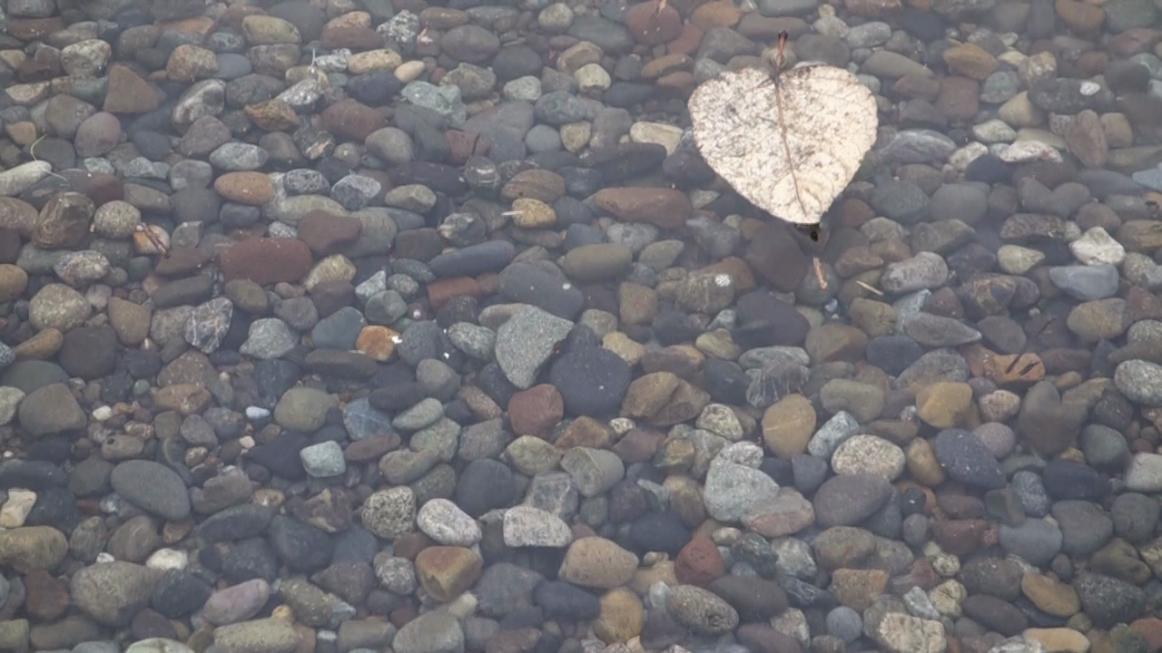 video still of a leaf floating on the ocean