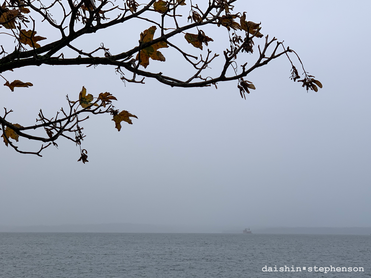 tree branch, freighter boat on the horizon line