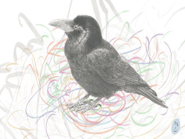 Jungle crow close-up