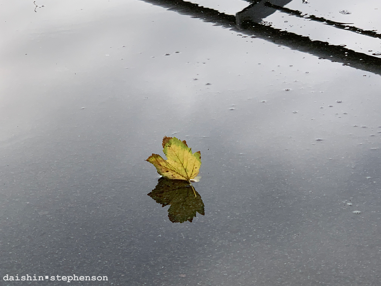 leaf standing up in puddle with its own mirrored reflection