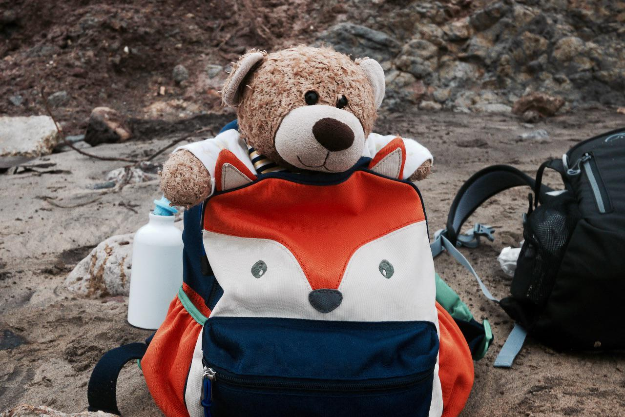 Benji the bear peaks out of a rucksack near Freshwater Bay on the Isle of Wight