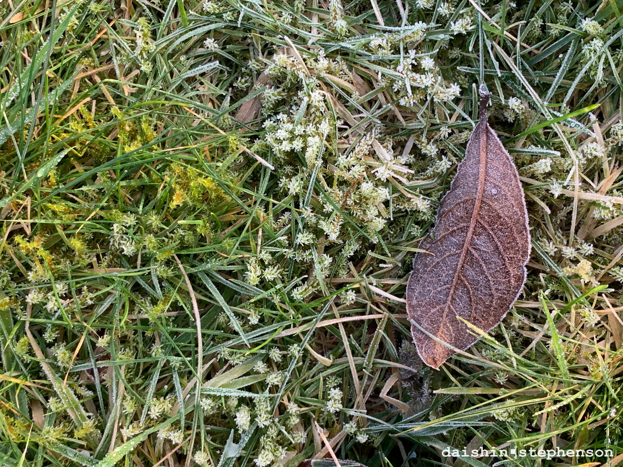 frost covered leaf on a bed of moss and grass