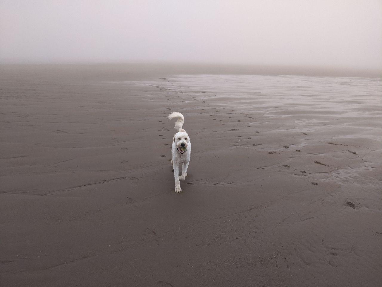Max on beach 3