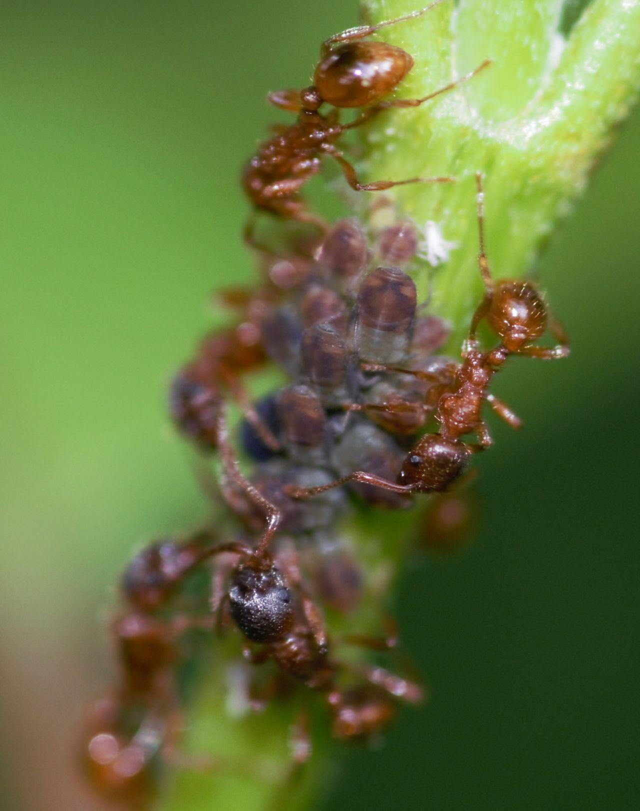 ant farming