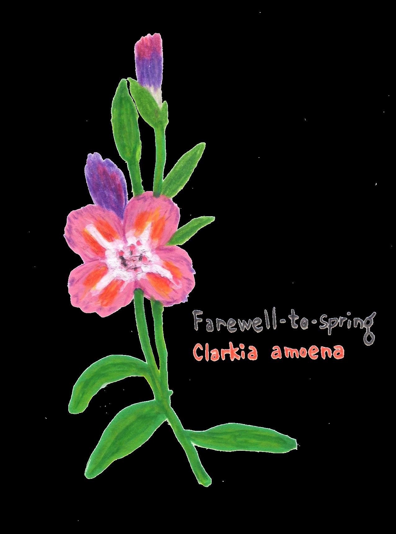 farewell to spring flower illustration