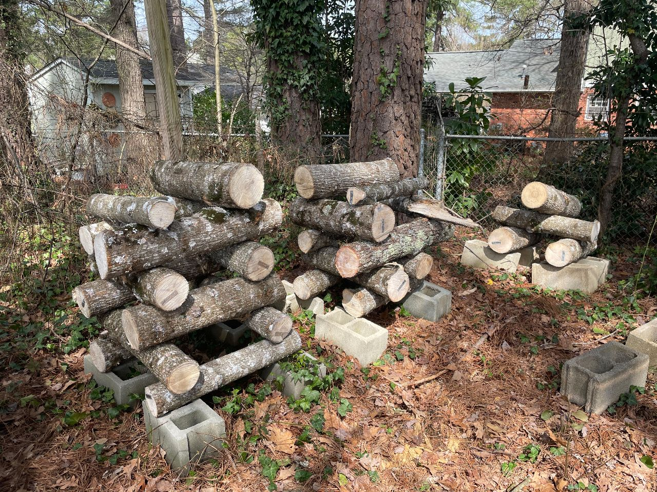 Three stacks of inoculated logs.