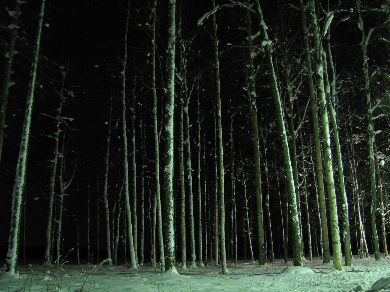 imposing image of trees in a forest at night